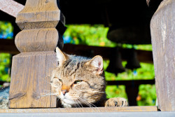 Elm  A cat on the belltower  2014-10-31 16:31:55