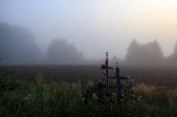 MichalD  Early morning at Podlasie  33  2016-08-02 09:30:43