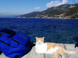 Mitrut Popoiu  Athonite happy cat  2018-03-02 22:50:40
