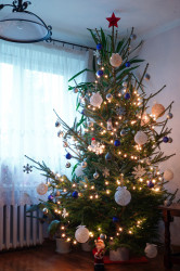 jarek  Our Christmas tree  2021-01-12 20:53:02