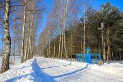 jarek11  The path to Orthodox cementary in Mallinniki  2021-02-21 13:18:14